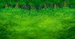 FFVA Forest BG