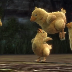 Cocoon and Gran Pulse chocobo chicks in <i>Final Fantasy XIII</i>.