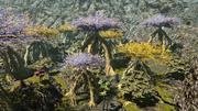 FFXIV Chocobo Forest