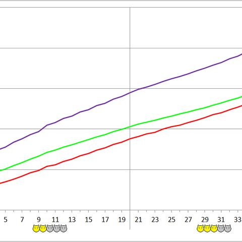 Spiranthes development chart.