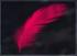 Ruby-Chocobo-FFXV