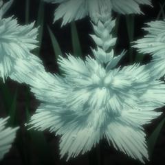 Белые силлецветы в <i><a href=
