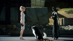 Luna-and-dogs-FFXV