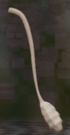 LRFFXIII Fairy Tail