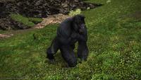 False Gigantopithecus