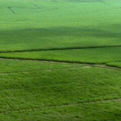 Countryside as seen in <i>Final Fantasy VII: Advent Children</i>.