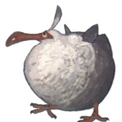 Fledgling Dodo.