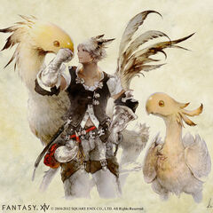 Male Miqo'te with chocobos.