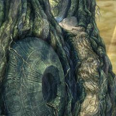 Tree Trunk.