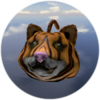 Tiger Doge