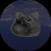 Moon Doge