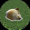Unfinished Doge