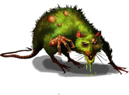 Infected King Rat