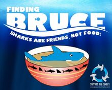 Finding bruce