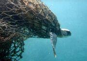 Ghost-net-turtle-caught-water-01 jpg 653x0 q80 crop-smart