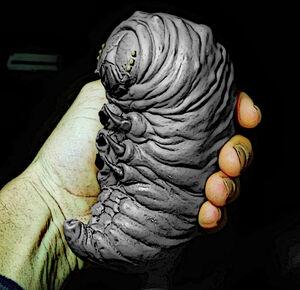 Render Larvae