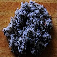 BlueVushroon2