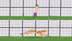 Cheetah and Ferb
