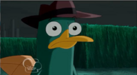 Perry in shock at were cow