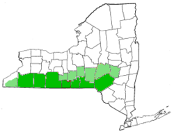 Map of New York highlighting Southern Tier