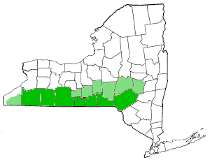 File:Map of New York highlighting Southern Tier.png