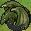 Wind dragon map