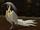 FE10 Heron (Transformed) -Rafiel-.png