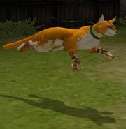 FE9 Cat Transformed (Lethe)