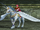 FE9 Falcon Knight (Marcia).png