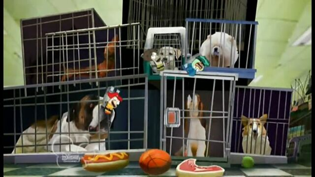 File:Bouncing on chew toys.jpg