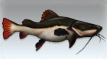 File:Redtail Catfish.jpg