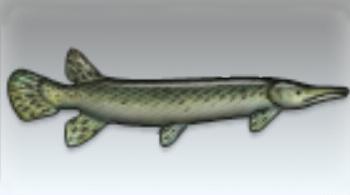 File:Alligator Gar.jpg