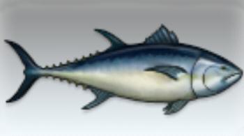 File:Bluefin Tuna.jpg