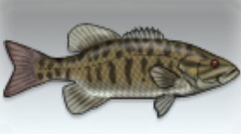 File:Smallmouth Bass.jpg