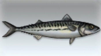 File:Mackerel.jpg