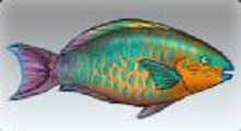 File:Rainbow Parrotfish.jpg