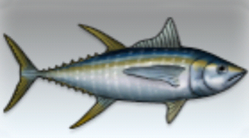 File:Yellowfin Tuna.jpg