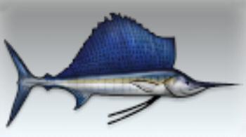 File:Sailfish.jpg