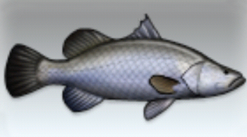 File:Barramundi.jpg