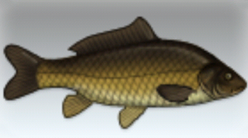 File:Common Carp.jpg