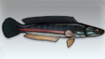 File:Giant Snakehead.jpg