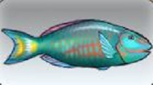 File:Spotlight Parrotfish.jpg