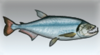 File:Payara.jpg