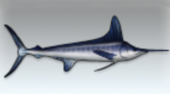 File:White Marlin.jpg