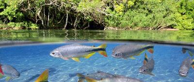 Середовище існування риб