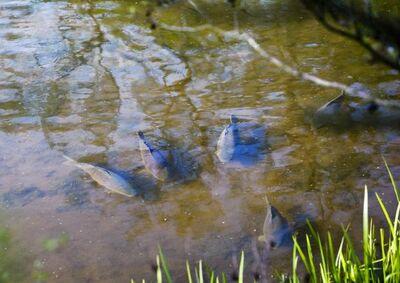 Ловля риби в травні