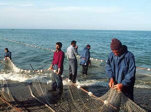 Промисловий лов риби