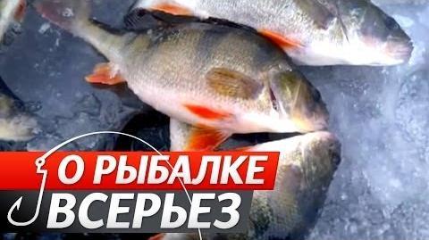 """Окунь. №38 """"Про Риболовлю Всерйоз""""(слова експерта російською)."""