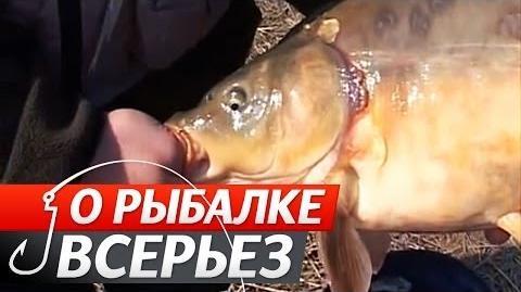 """Ловля Великого Коропа. №20 """"Про Риболовлю Всерйоз"""" (слова експерта російською)."""