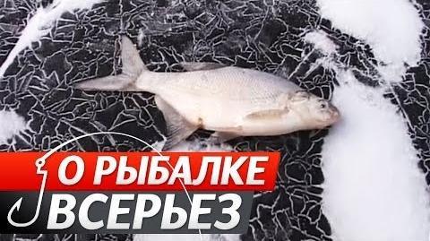 """Зимова Ловля Білої Риби. №52 """"Про Риболовлю Всерйоз""""."""